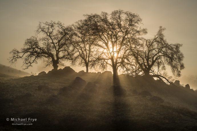 3. Oaks and sunbeams, Sierra foothills, California