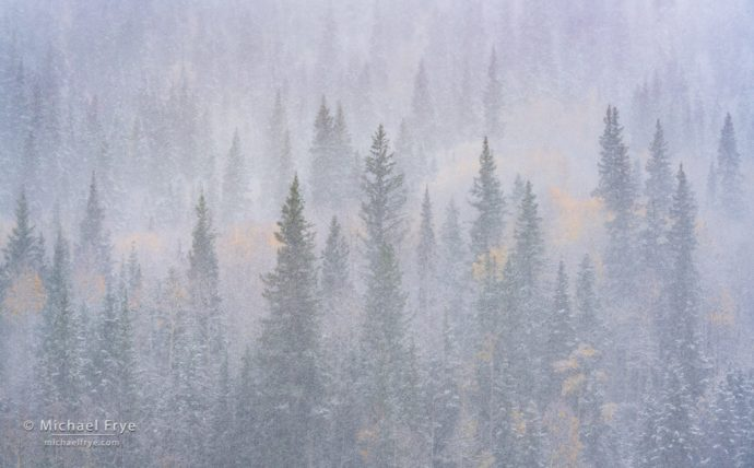 Photographing an Autumn Blizzard with a fast shutter speed: Aspens and conifers in a snowstorm, Uncompahgre NF, CO, USA