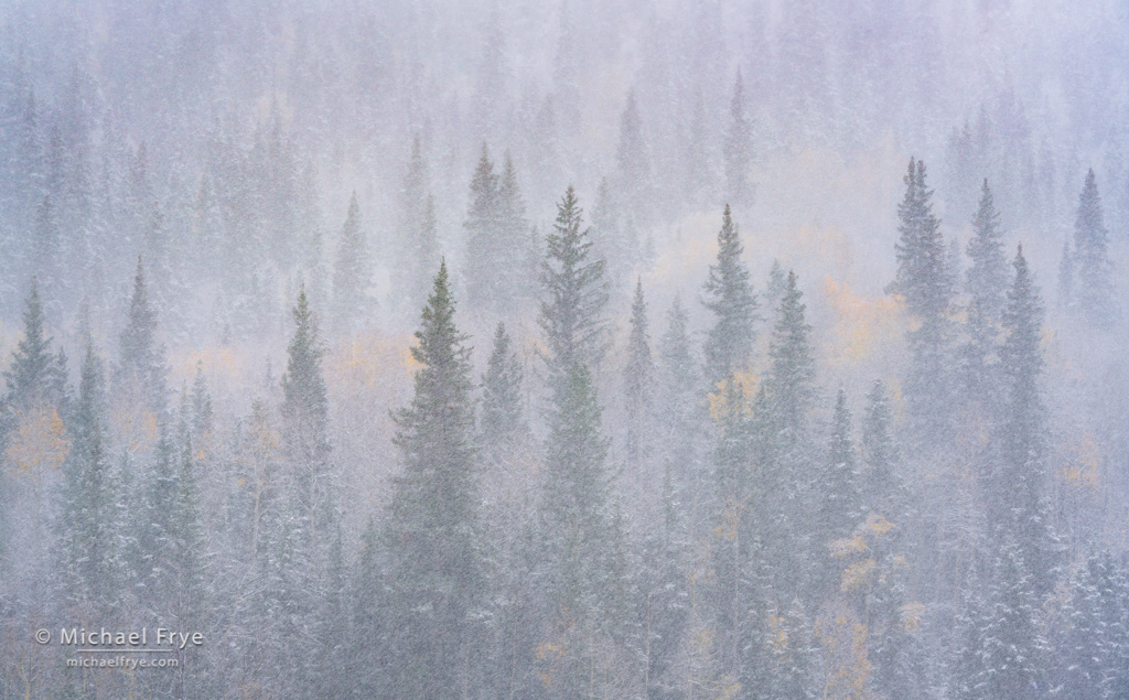 Photographing An Autumn Blizzard