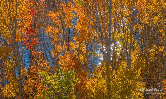 30. Aspens above Grant Lake, Inyo NF, California