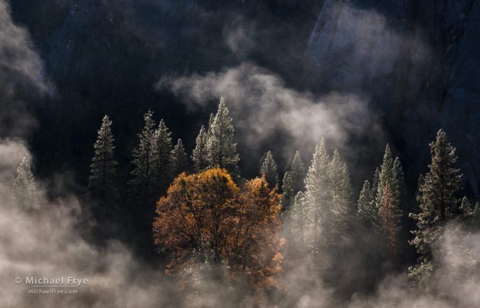 Backlight Photography, Pines, oak, and mist, Yosemite NP, CA, USA
