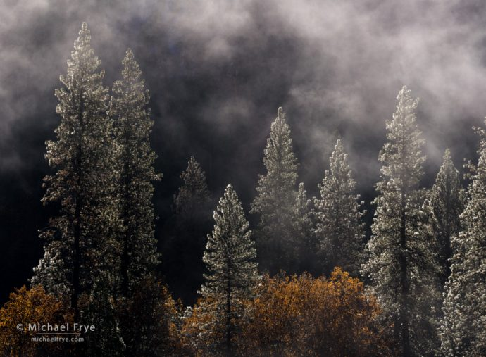 Pines and oaks after a rainstorm, Yosemite NP, CA, USA