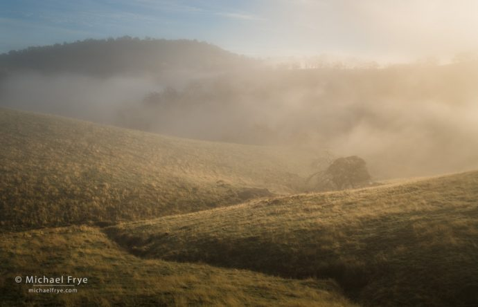 Grasslands, oaks, and fog, Sierra Nevada foothills, Mariposa County, CA, USA