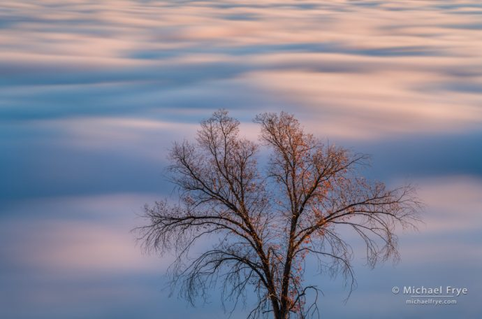 Oak tree above a fog layer, Mariposa County, CA, USA