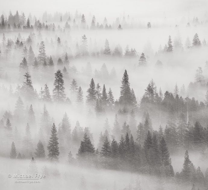 Misty trees from Tunnel View, Yosemite NP, CA, USA
