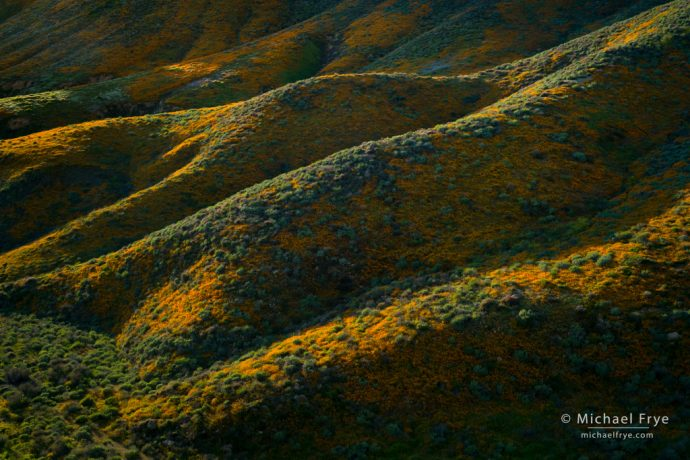 Poppy-covered hills, Walker Canyon, CA, USA