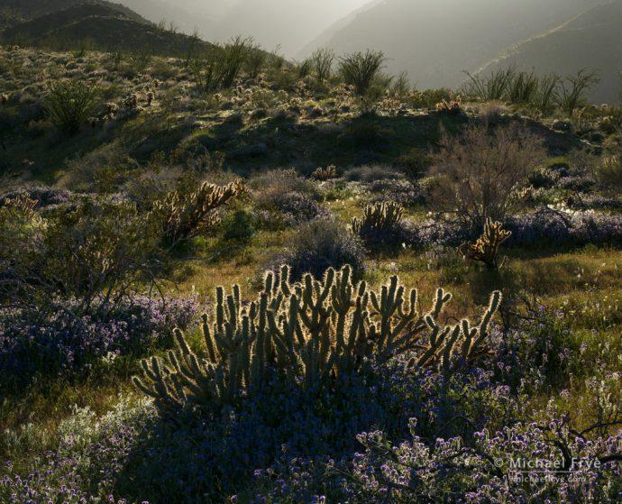 Desert garden, Anza-Borrego Desert SP, CA, USA