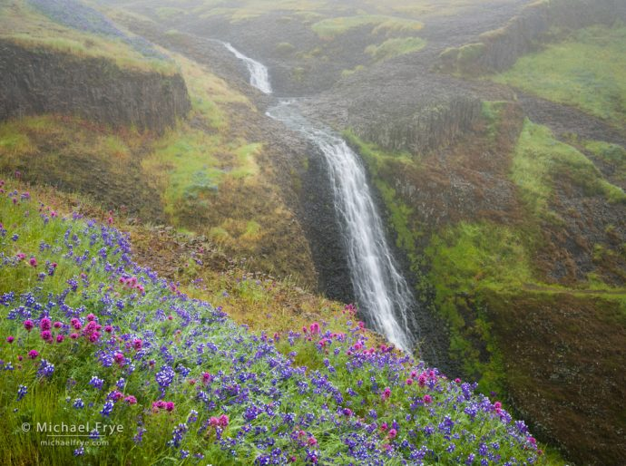 Waterfall and wildflowers in the fog, Table Mountain, CA, USA