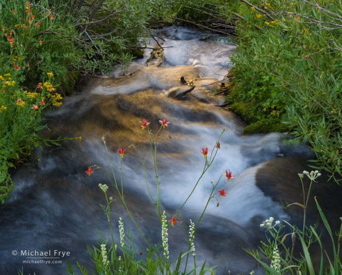 Creek, flowers, and reflections, Inyo NF, CA, USA