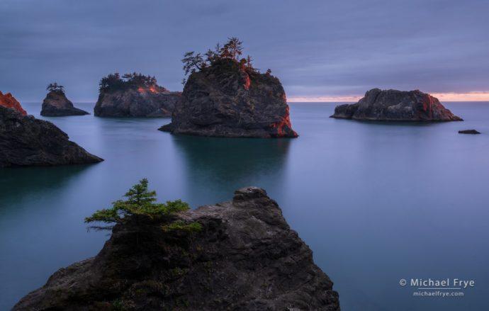 Spruce-covered sea stacks at sunset, Oregon coast, USA