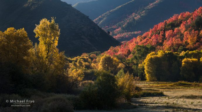 Maples and cottonwoods, Wasatch Mountains, UT, USA