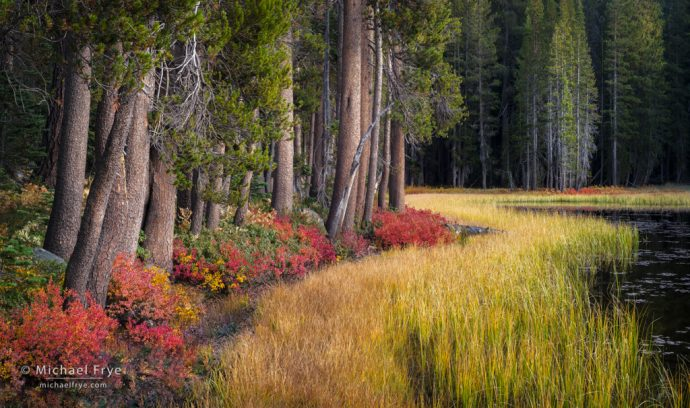 Autumn lakeshore, Yosemite NP, CA, USA