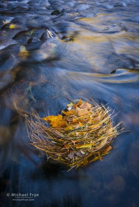 Leaf stack in the Merced River, Yosemite NP, CA, USA