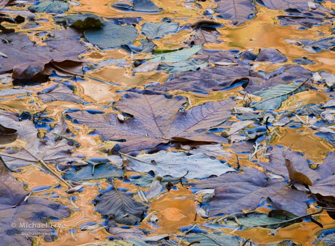 Leaves and reflections in the Merced River, Yosemite NP, CA, USA