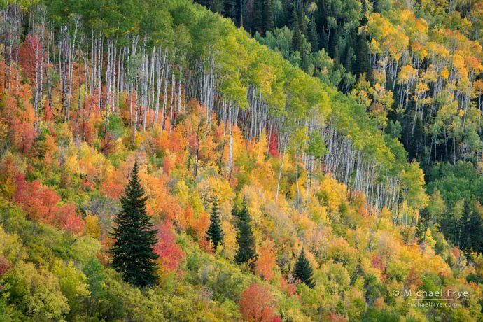 28. Autumn kaleidoscope, Manti-La Sal NF, Utah