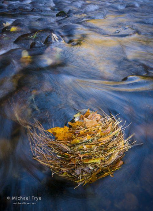 34. Leaf stack in the Merced River, Yosemite NP, California
