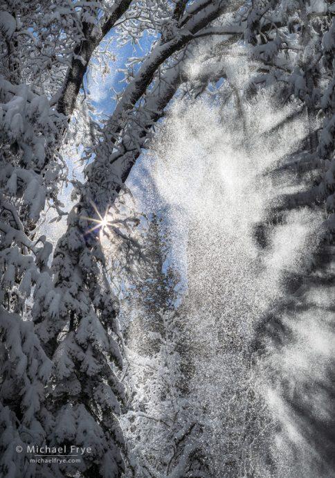 6. Snow falling from trees, Yosemite NP, California