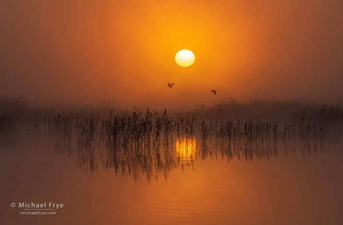 42. Pintails at sunrise, San Joaquin Valley, California