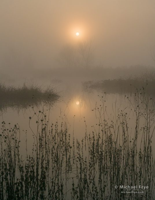 Foggy sunrise, San Joaquin Valley, CA, USA