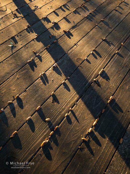 Acorns on my deck