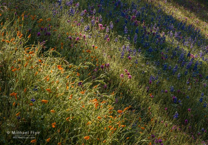 Sunlight, shadows, and wildflowers, Mariposa County, CA, USA