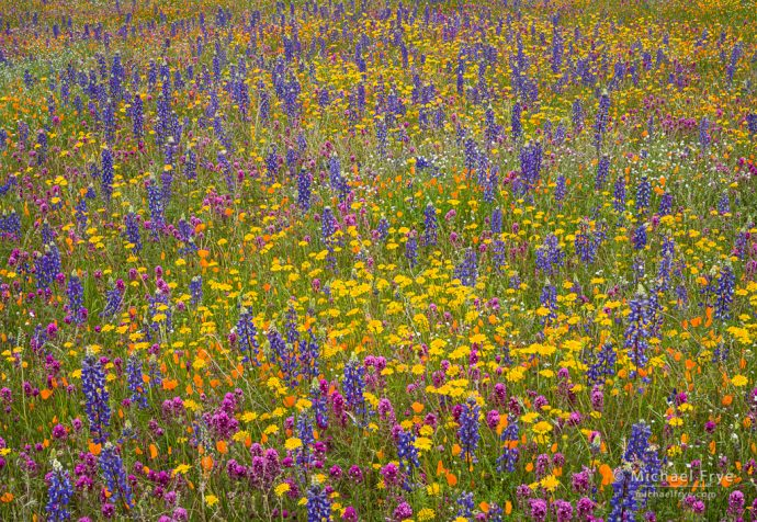Spring colors, Mariposa County, CA, USA