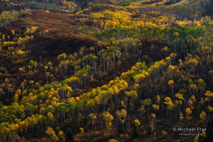 Autumn hillside with aspens and oaks, White River NF, CO, USA