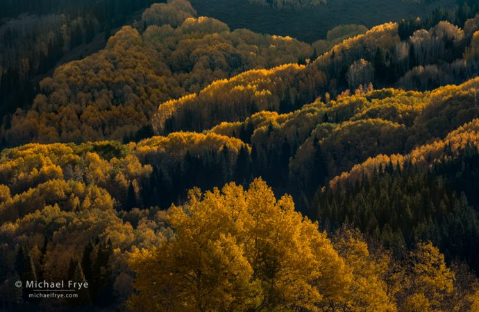 Aspen-covered hillsides, White River NF, CO, USA