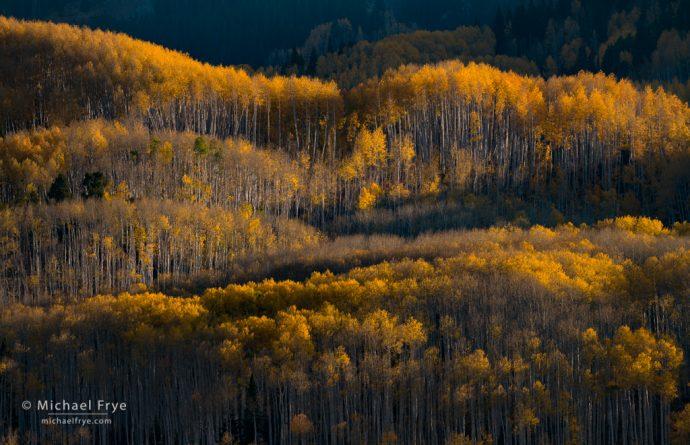 Morning light on aspens, Grand Mesa-Uncompahgre-Gunnison NF, CO, USA