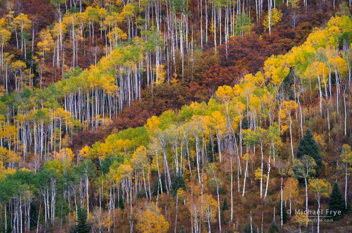 Aspens and oaks, Colorado, USA
