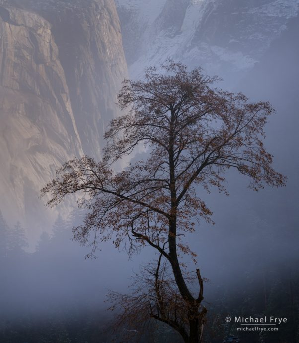 Tree and fog with the Royal Arches,  Yosemite NP, CA, USA