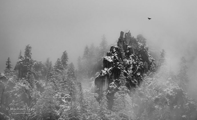 Raven, trees, and crags, Yosemite NP, CA, USA