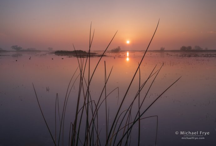 Sunrise in a San Joaquin Valley marsh, CA, USA