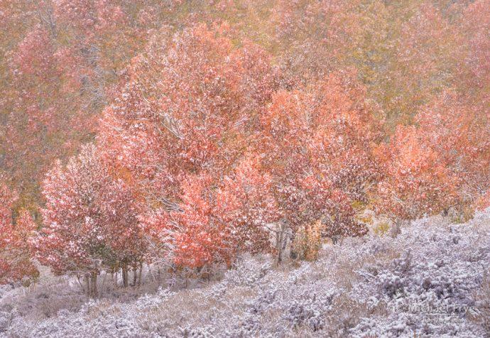 Aspens and sagebrush in snow, Toiyabe NF, CA, USA