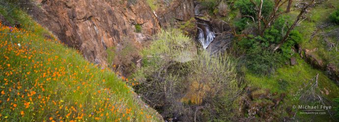 Wildflowers and waterfall in a foothill canyon, Sierra Nevada, CA, USA