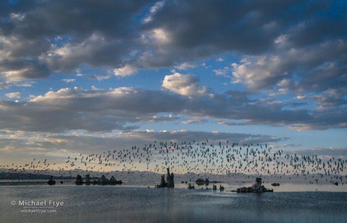 Clouds, tufa, and phalaropes, Mono Lake, CA, USA