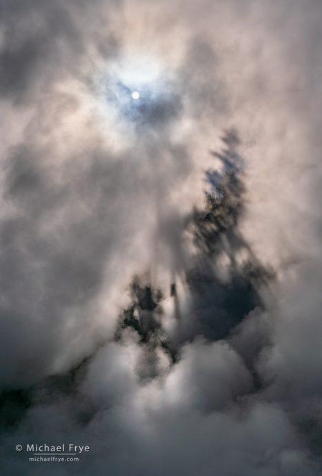 Sun, mist, and tree shadows, Yellowstone NP, WY, USA